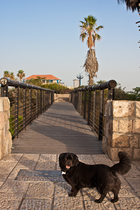 Wishing Bridge. Jaffa, Israel