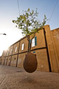 Suspended Tree. Jaffa, Israel
