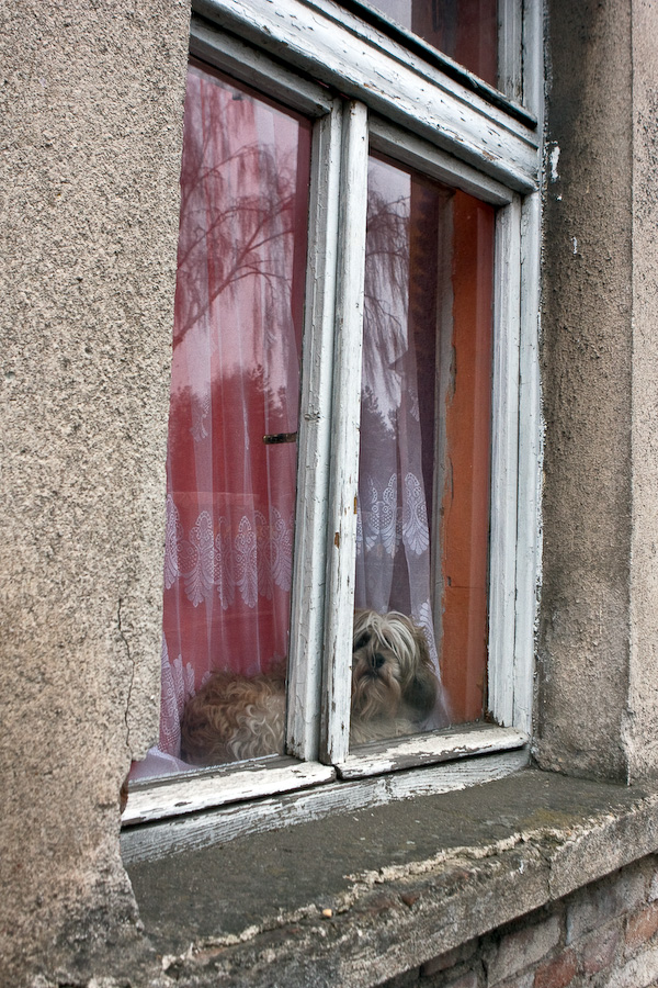 Dog looking from behind window