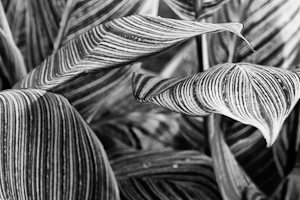 one more example of green leafs after creative bw conversion