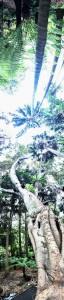 Melbourne Botanical Gardens - Vertical Panorama