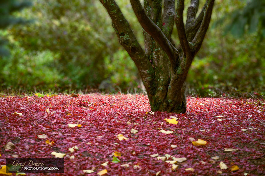 Autumn in National Rhododendron Gardens, Australia 11