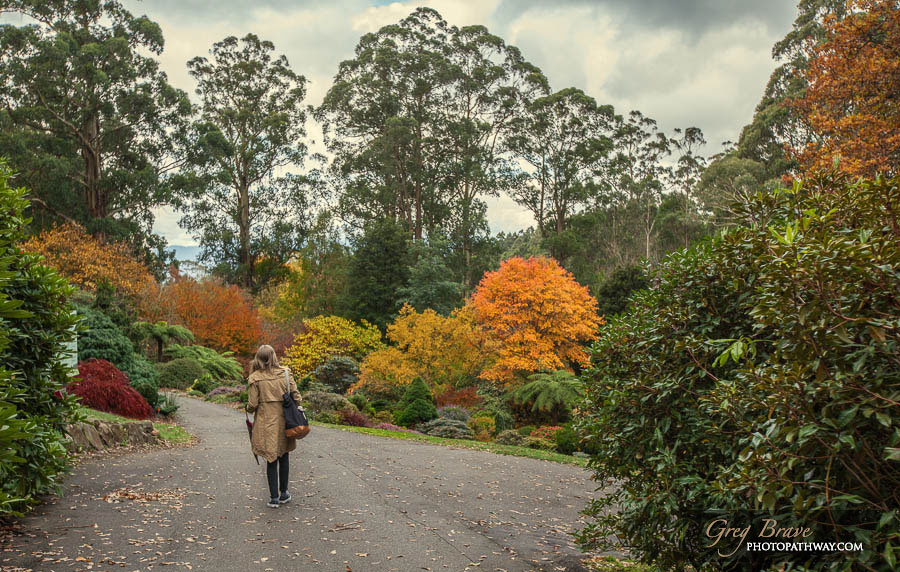 Autumn in National Rhododendron Gardens, Australia 2