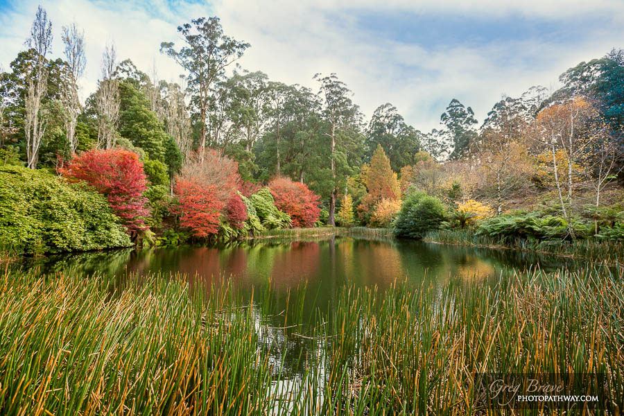 Autumn in National Rhododendron Gardens, Australia 5