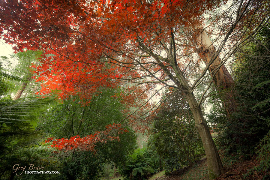 Autumn in National Rhododendron Gardens, Australia 6
