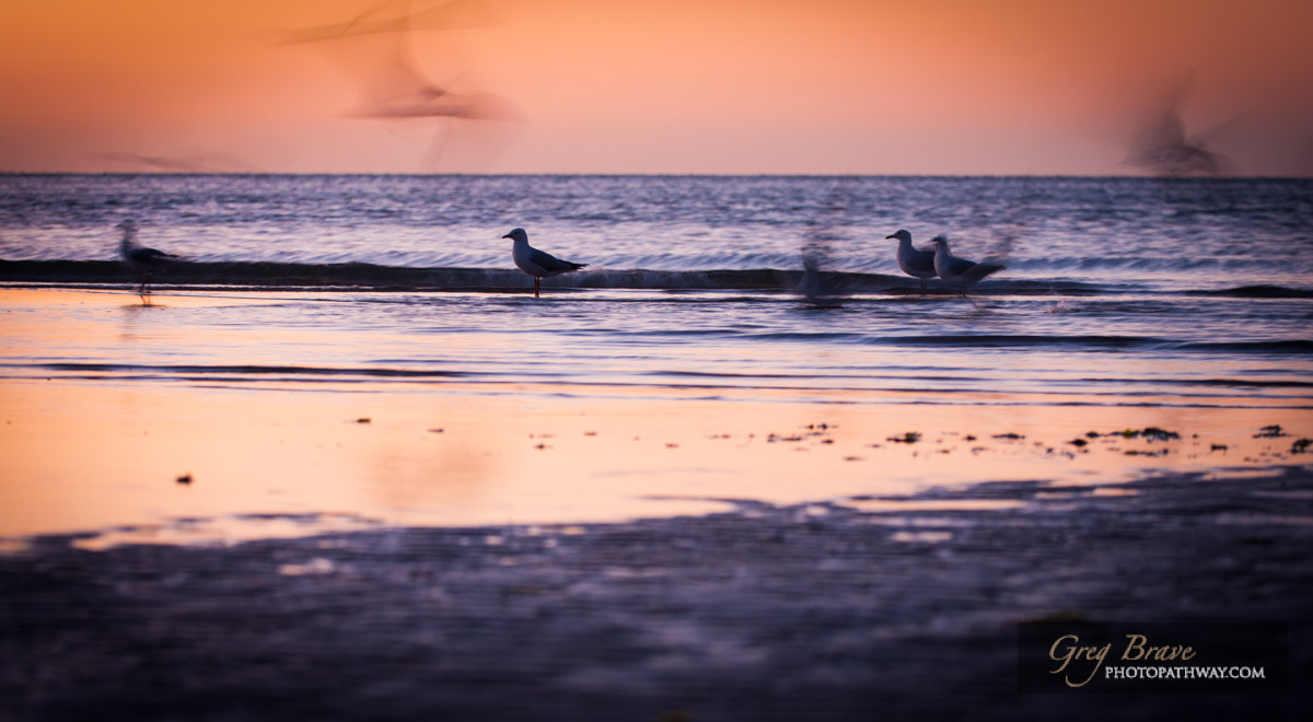 Seagulls in blurred motion on seashore at sunset