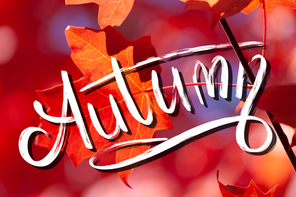 Autumn - hand lettering on red and orange maple leafs background