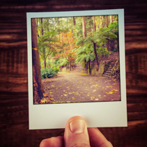 Hand holding instant photo of autumn scene in Australian garden with copy space