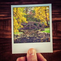Hand holding instant photo of autumn scene in Australian garden