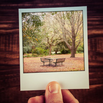 Male hand holding instant photo of autumn scene - empty picnic t