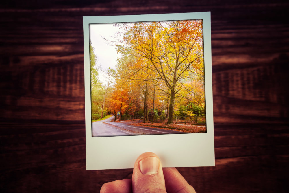 Hand holding instant photo of rural road among autumn trees with