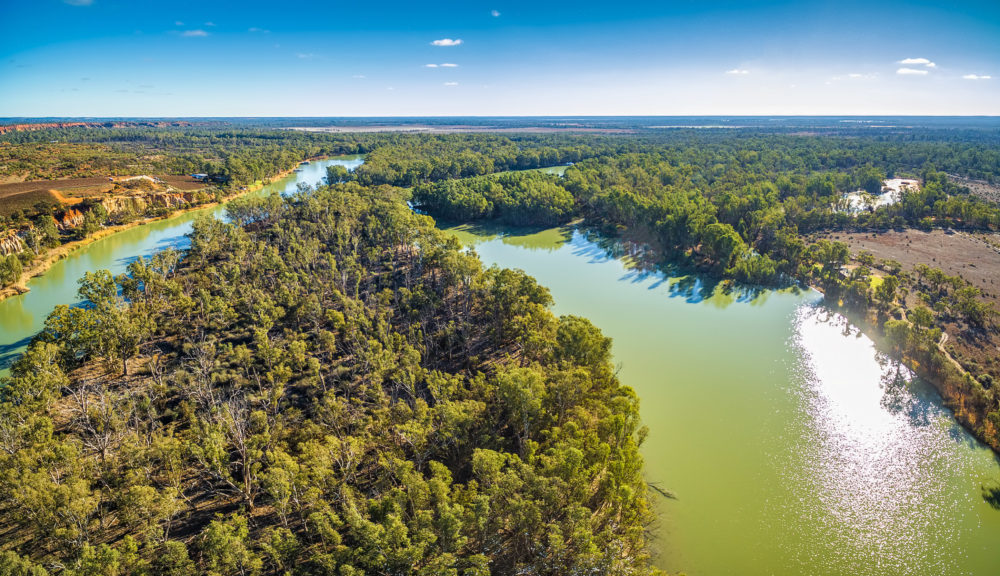 Murray River and native Australian vegetation on bright sunny day. Murtho, South Australia