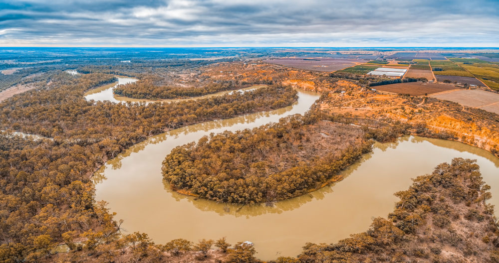 Aerial panorama of Murray River bends in Riverland region of South Australia