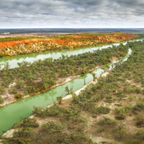 Aerial panoramic landscape of gum trees growing on the shores of the famous Murray River flowing through Riverland region of South Australia