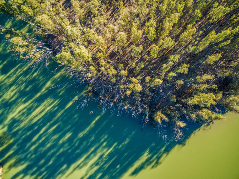 Trees and river at sunset with long shadows - aerial view