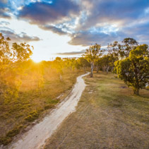Winding dirt road among eucalyptus trees at sunset with sun flare