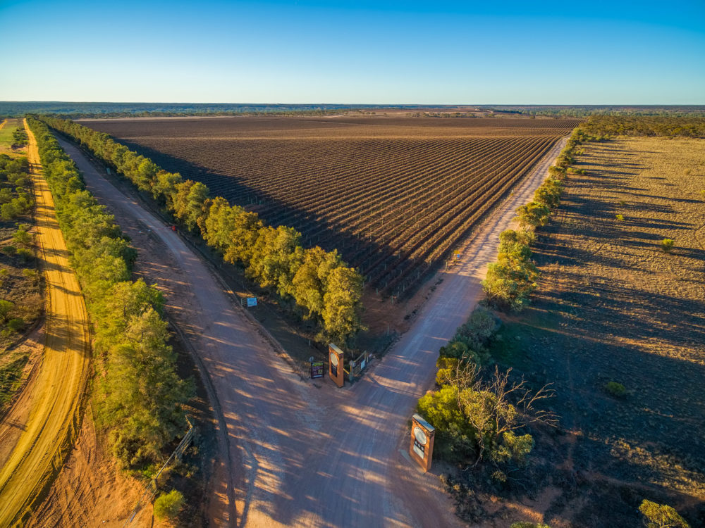 Aerial view of winter vineyard at sunset