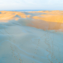 Aerial view of one person in sand dunes at sunrise