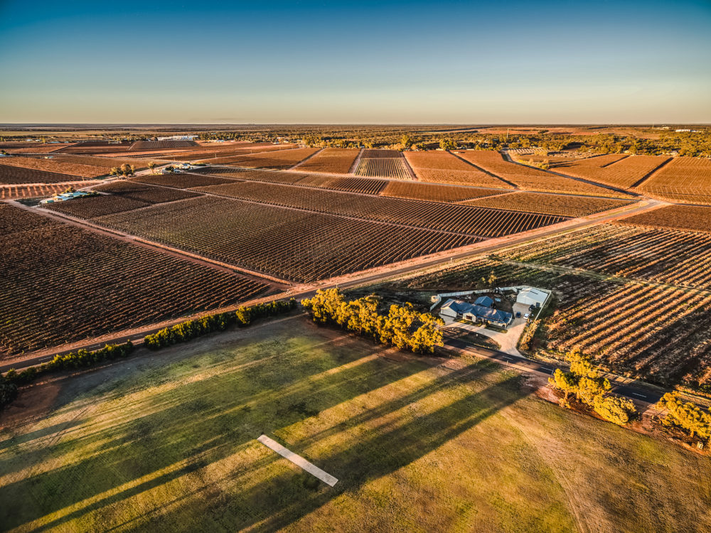 Aerial landscape of rectangles of vineyards in Monash, South Australia at sunset