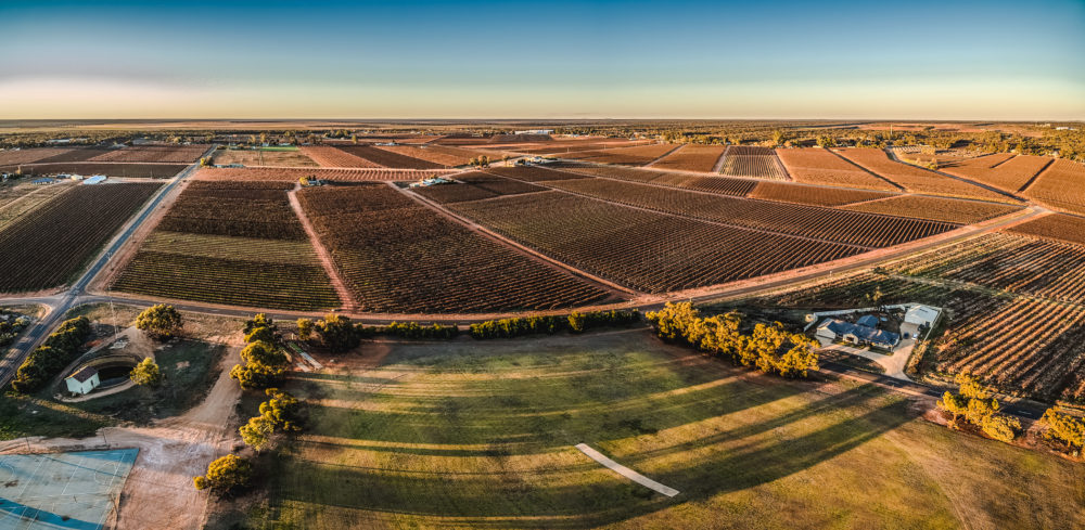 Aerial panorama of rectangles of vineyards in Monash, South Australia at sunset