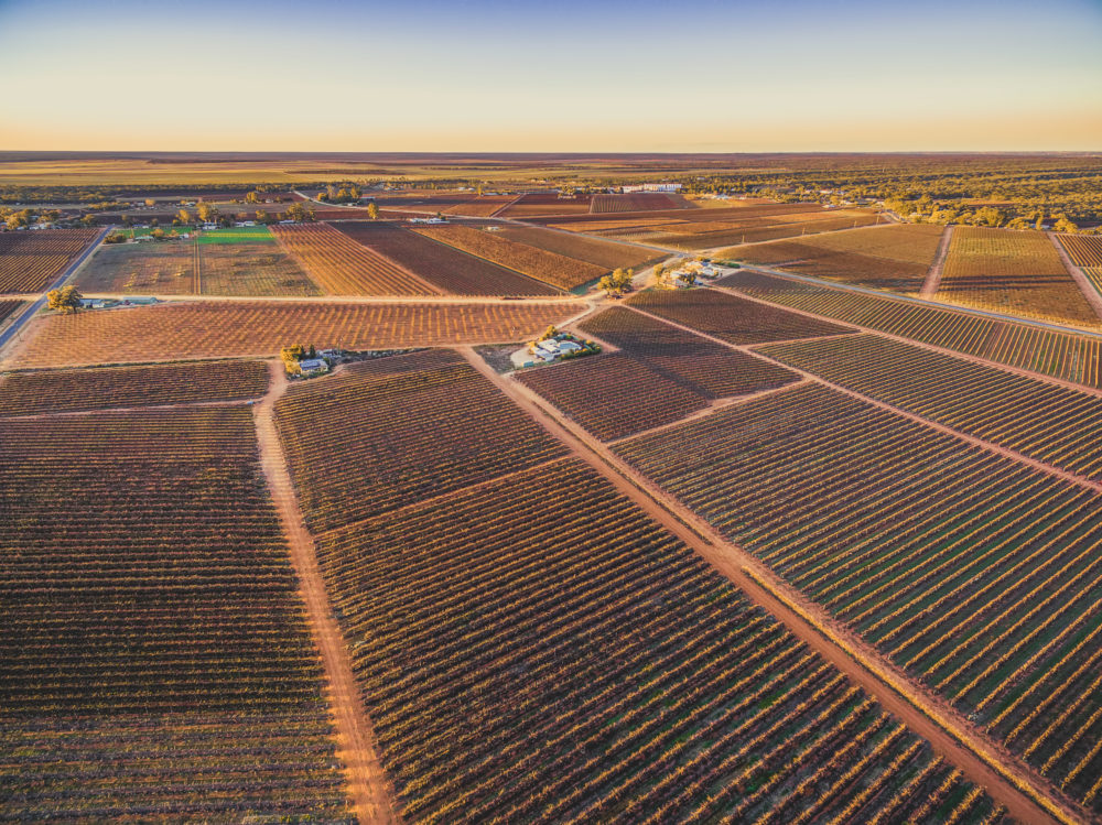 Vast spaces covered by vineyards in South Australia at sunset