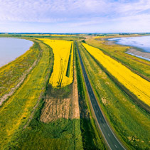 Aerial Panorama of rural road passing through vivid yellow canola fields between two lakes