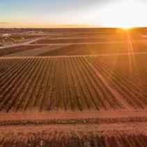 Sun touching the horizon over beautiful vineyards of South Australia