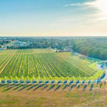 Aerial view of beautiful vineyard in Moama, Australia