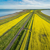 Straight road passing through yellow canola fields and lakes in Australia - aerial view