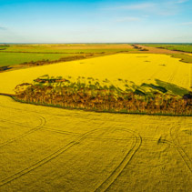 Aerial panorama of canola field at sunset in Australia