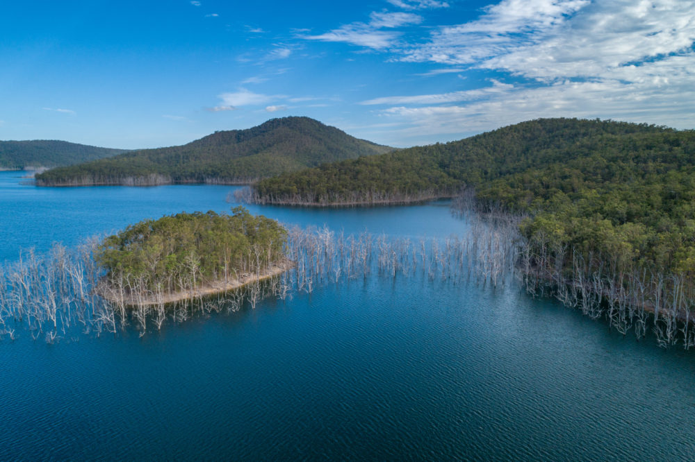 Aerial landscape of bare trees growing in water at Advancetown Lake in Queensland, Australia