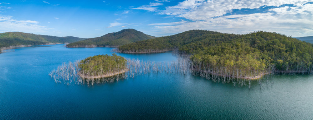 Aerial panorama of bare trees growing in water and mountains at Advancetown Lake in Queensland, Australia