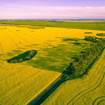 Canola field and agricultural land at sunset in Victoria, Australia