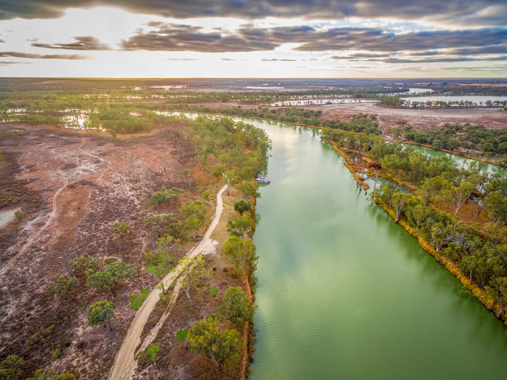 Aerial view of majestic Murray River flowing among islands of gum trees at sunset in South Australia