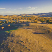 Aerial view of yellow hills and trees at sunset in NSW, Australia