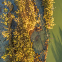 Aerial view - looking down at eucalyptus trees and Murray River at sunset