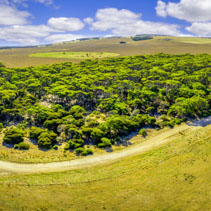 Kangaroo Island aerial panorama - winding rural road, trees, and