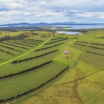 Aerial panorama of Devil's Corner winery. East coast, Apslawn, Tasmania, Australia