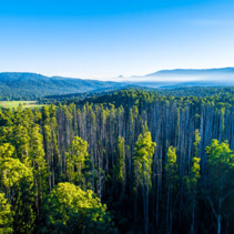 Scenic eucalyptus forest and mountains in Australia