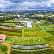 Aerial panorama of agricultural fields and countryside in Wandin East, Melbourne, Australia