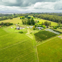 Aerial view of crops, green grass, and trees in beautiful Australian countryside