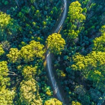 Gravel road winding through eucalyptus forest at sunrise - aerial view