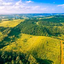 Aerial view of macadamia farm in Australia