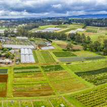 Aerial panorama of fields and greenhouses in Australian countryside