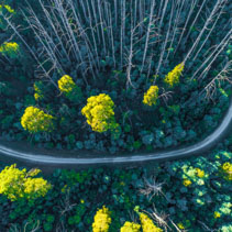 Road bend in eucalyptus forest in Australia - aerial view