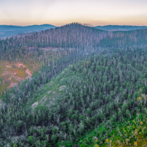 Forest of bare trees and mountains at sunset - aerial panorama