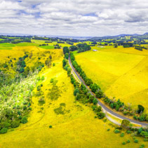 Aerial panoramic landscape of Australian countryside - yellow fields and hills