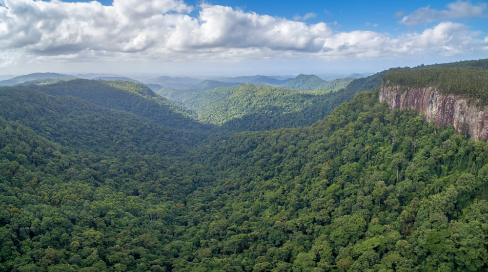 Aerial panoramic landscape of Springbrook National Park in Queensland, Australia