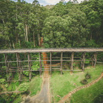 Aerial view of old trestle bridge among ferns and eucalyptuses in Australia