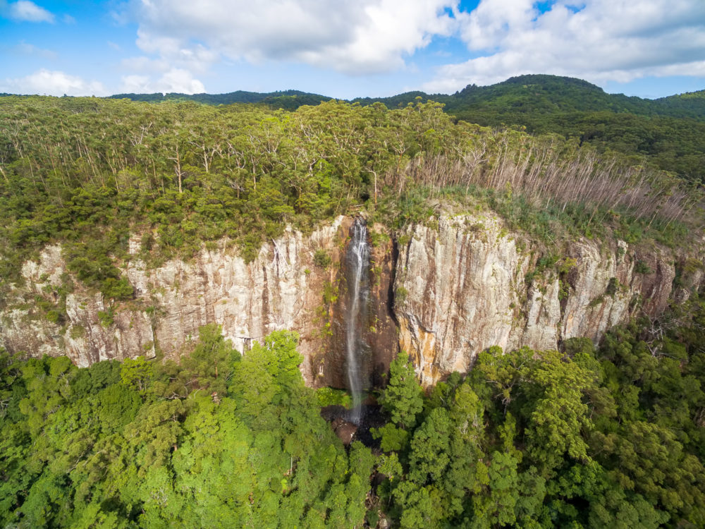 Rainbow Falls flowing down huge cliff and native Australian rainforest. Springbrook National Park, QLD, Australia
